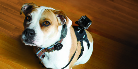 dog weight loss tips with technology