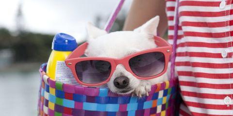 Eyewear, Textile, Pattern, Red, Sunglasses, Pink, Carnivore, Carmine, Magenta, Snout,