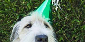add years to your dog's life