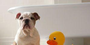 bathing Fido