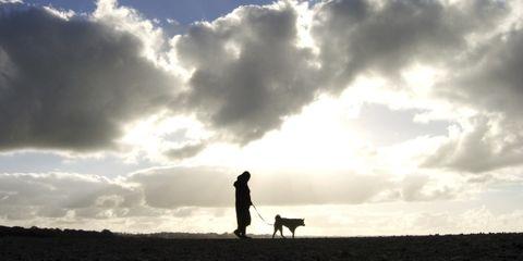 Human, Sky, Carnivore, Cloud, Dog, Mammal, People in nature, Dog breed, Cumulus, Sunlight,