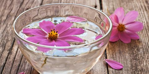 Petal, Flower, Purple, Magenta, Violet, Pink, Flowering plant, Serveware, Kitchen utensil, Lavender,