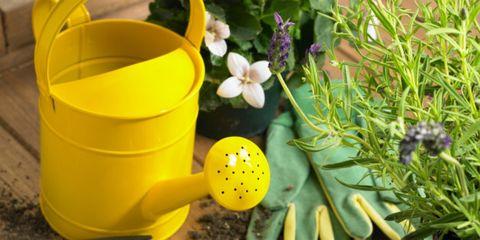 Yellow, Flower, Petal, Plastic, Herbaceous plant, Forb, Kitchen utensil, Subshrub,