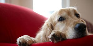 why your pet hurts