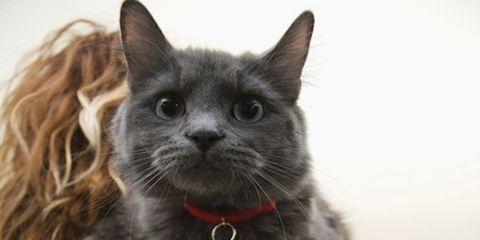 Whiskers, Carnivore, Vertebrate, Cat, Felidae, Mammal, Small to medium-sized cats, Collar, Iris, Snout,