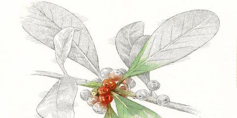 Organism, Leaf, Petal, Botany, Art, Flowering plant, Wing, Illustration, Creative arts, Drawing,