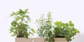 Leaf, Flowerpot, Photograph, Interior design, Houseplant, Annual plant, Snapshot, Herbaceous plant, Pottery, Plant stem,