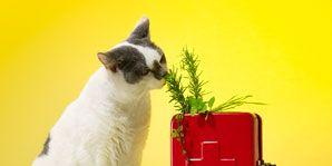 Could alternative treatments benefit your pets?