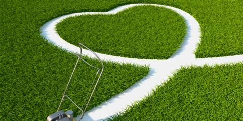 Green, Grass, Lawn, Groundcover, Grass family, Artificial turf, Heart, Field, Lawn mower, Hedge,