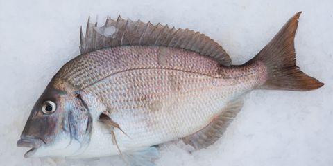 Organism, Vertebrate, Fish, White, Azure, Grey, Marine biology, Ray-finned fish, Fish, Fin,