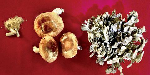 Foods for immune system: mushrooms