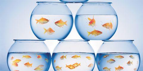 Gold fish bowls