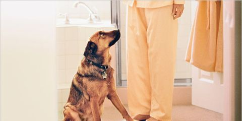 lose weight with your pet