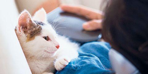 Finger, Skin, Comfort, Small to medium-sized cats, Whiskers, Carnivore, Felidae, Cat, Vertebrate, Nail,