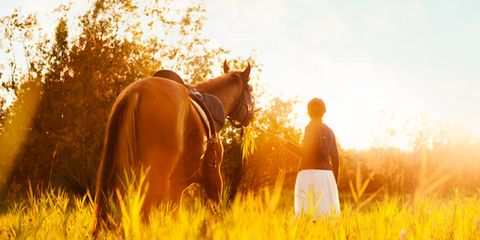 Brown, Mammal, People in nature, Horse, Working animal, Field, Sunlight, Amber, Sorrel, Agriculture,