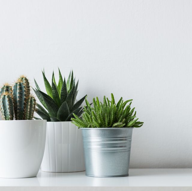 10 Best Artificial Plants 2019 - Best Places to Buy Fake or ...