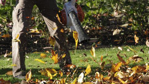 bladblazers zijn slecht voor het bodemleven