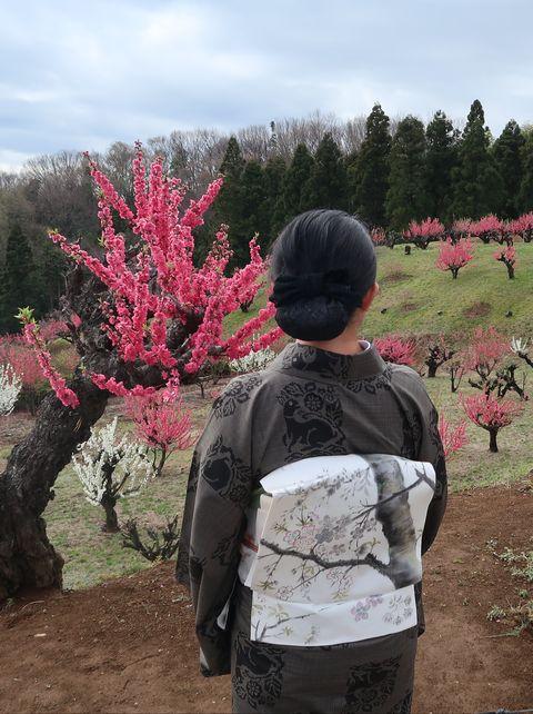 本場奄美大島紬の泥大島に桜が描かれた染め帯をお召しの朝香さん