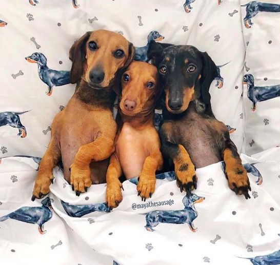 George At Asda Sausage Dog Bedding Is Instagram Hit Asda Home Bedding