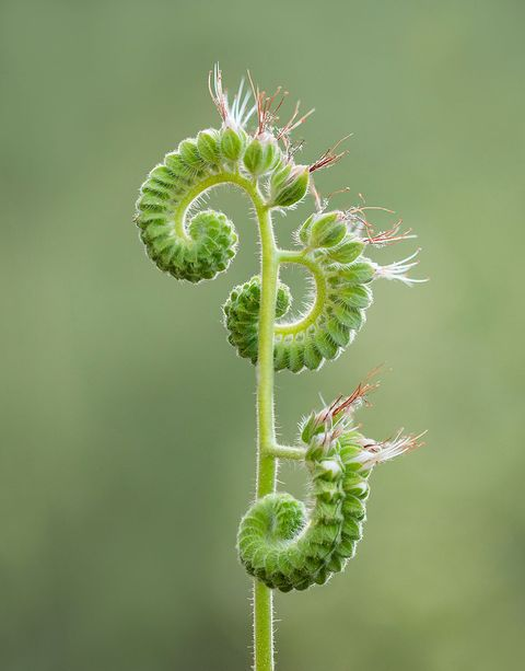 Ashley Moore - Unfurling - IGPOTY