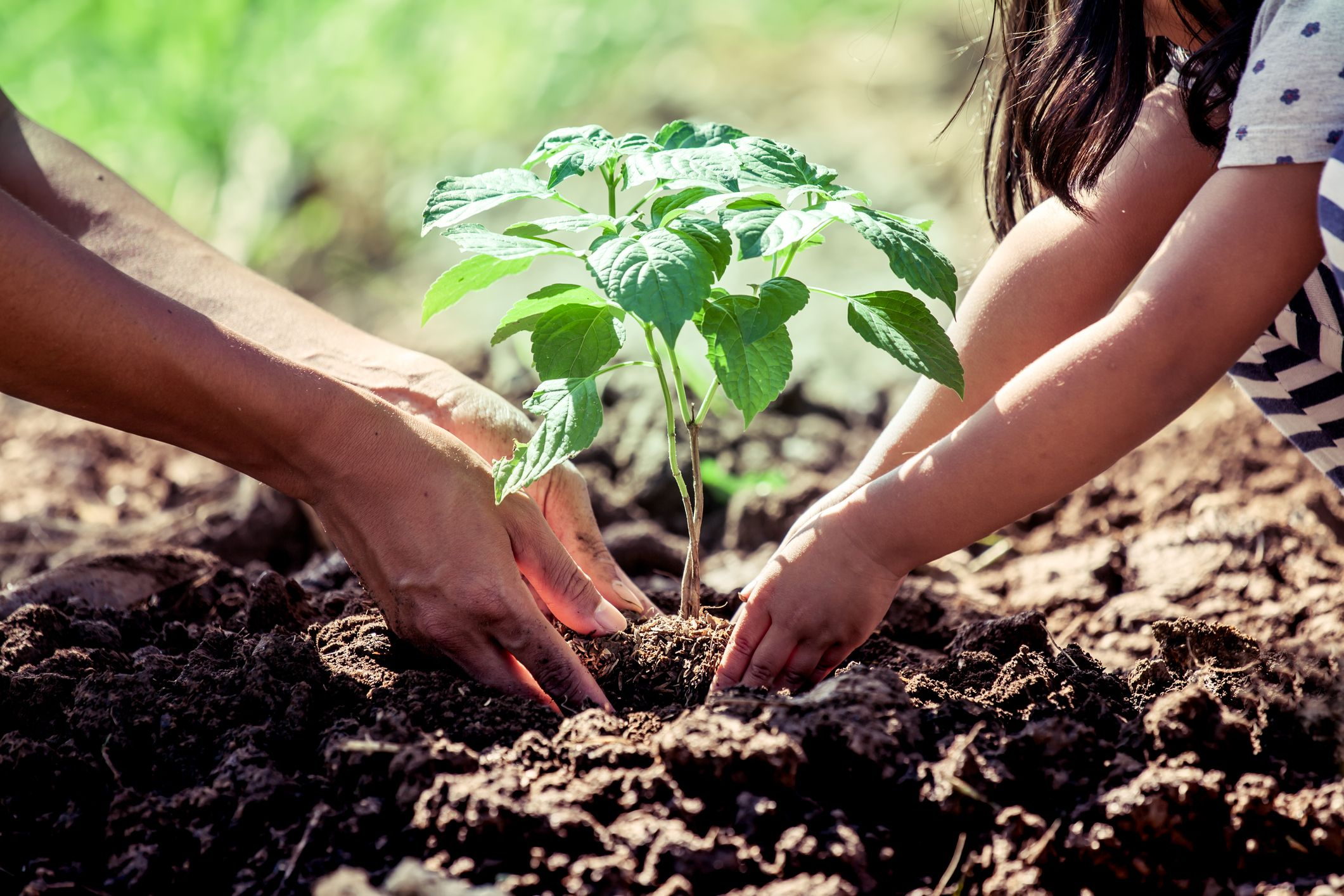 The Woodland Trust is calling on 1 million people to plant trees in a new campaign
