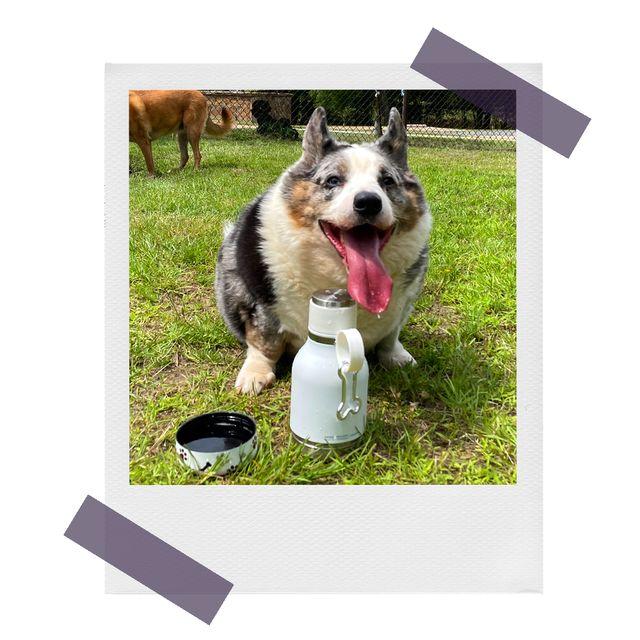 dog using asbou pet bowl bottle