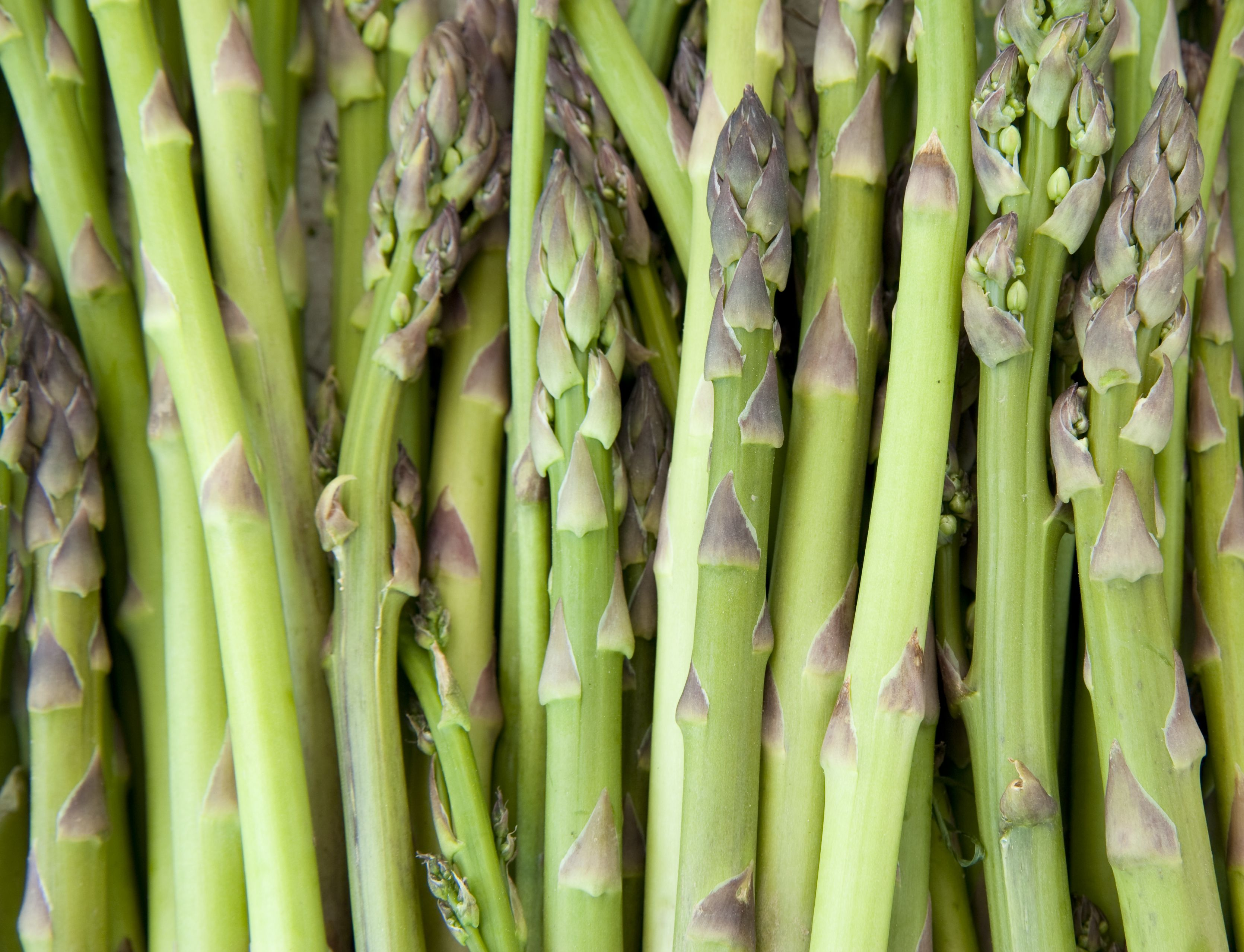How to Grow Asparagus - Tips for Planting Asparagus