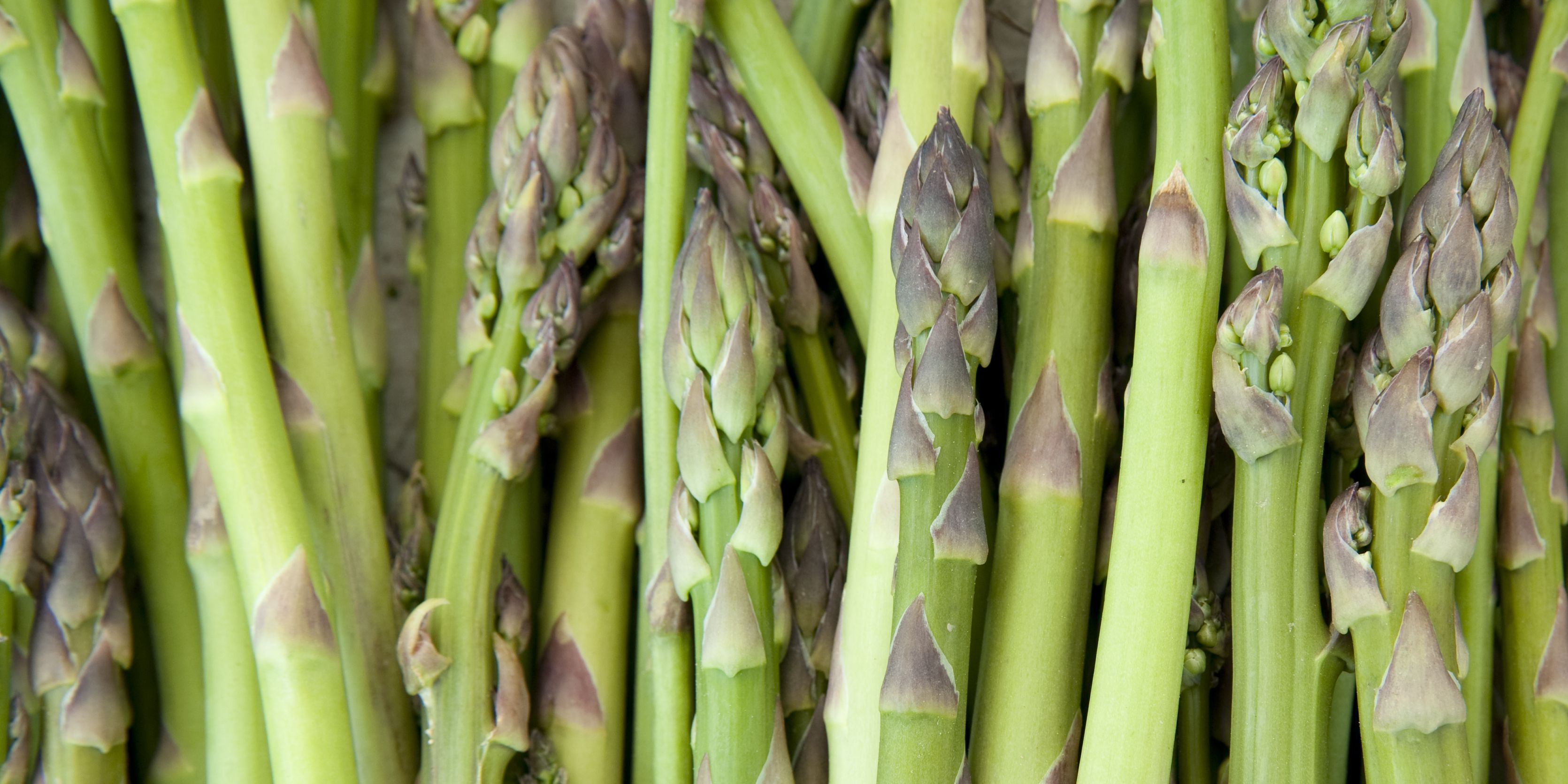 How to Grow Garden-Fresh Asparagus