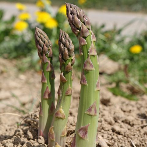How To Plant A Fall Garden Late Season Crops To Sow In The Summer