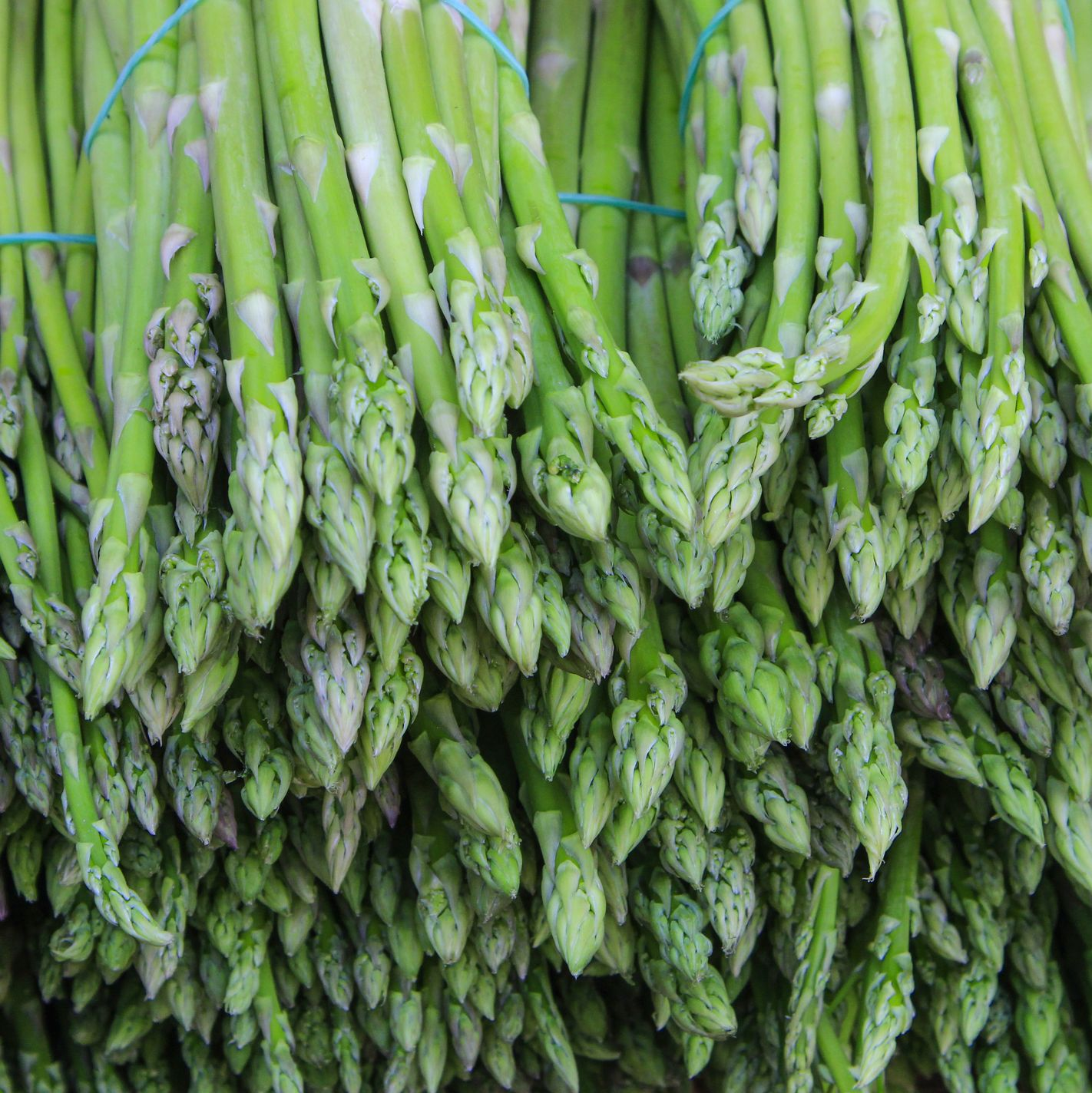 Asparagus selling in market