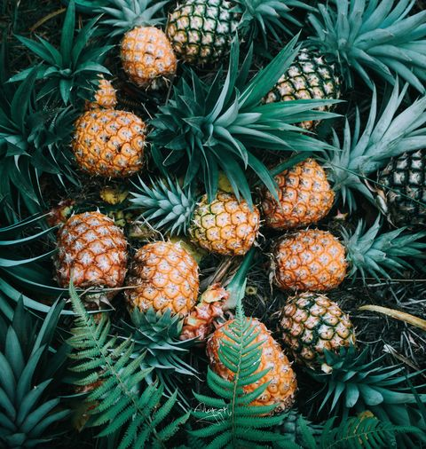 Pineapple, Plant, Ananas, Jack pine, sitka spruce, Fruit, Tree, Pine, red pine, oregon pine,
