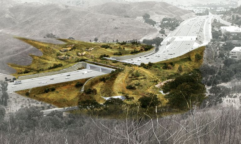 Breaking ground on the world's most ambitious mountain lion crossing