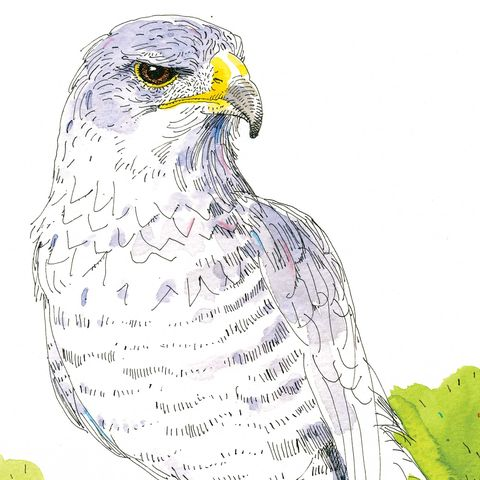 jim harrison, poem, weeping birds