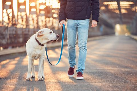 Low Section Of Young Man Walking With Labrador Retriever On Bridge