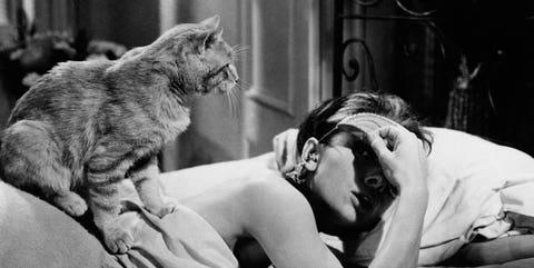 Audrey Hepburn 'Desayuno con diamantes' y Gato