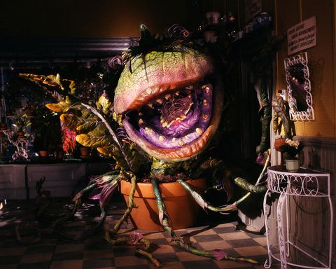 audrey ii plant from the film little shop of horrors