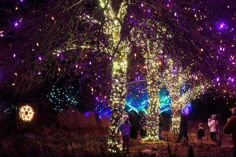 blossoms of light show at the denver botanic gardens