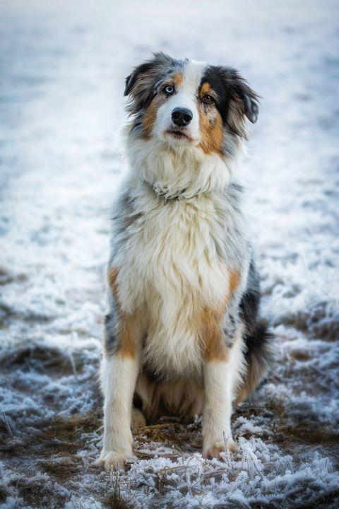 17 Medium Sized Dogs Best
