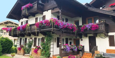 Austria flower displays