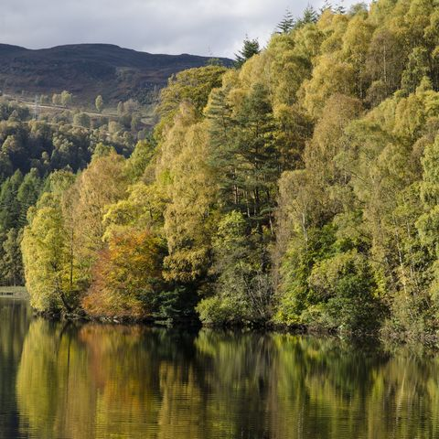 autumn colours, loch faskally, perthshire