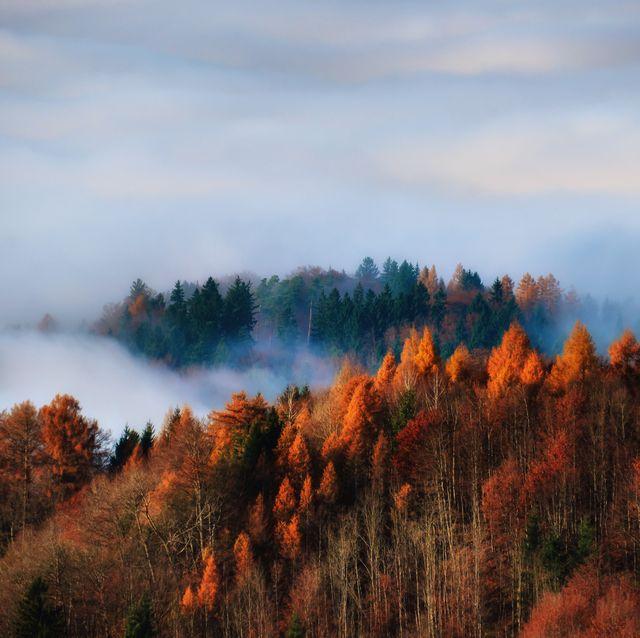 Autumn forest in the fog, Uetliberg, Switzerland
