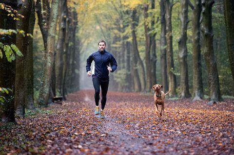 Autumn Forest Run