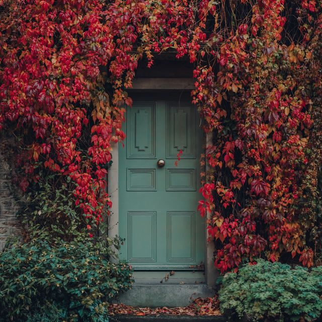 red and yellow foliage around the front door of a traditional english house in frome, somerset, uk