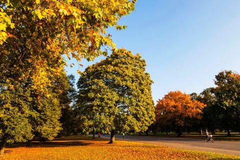 england, london, kensington, kensington gardens, autumn leaves photo by dukasuniversal images group via getty images
