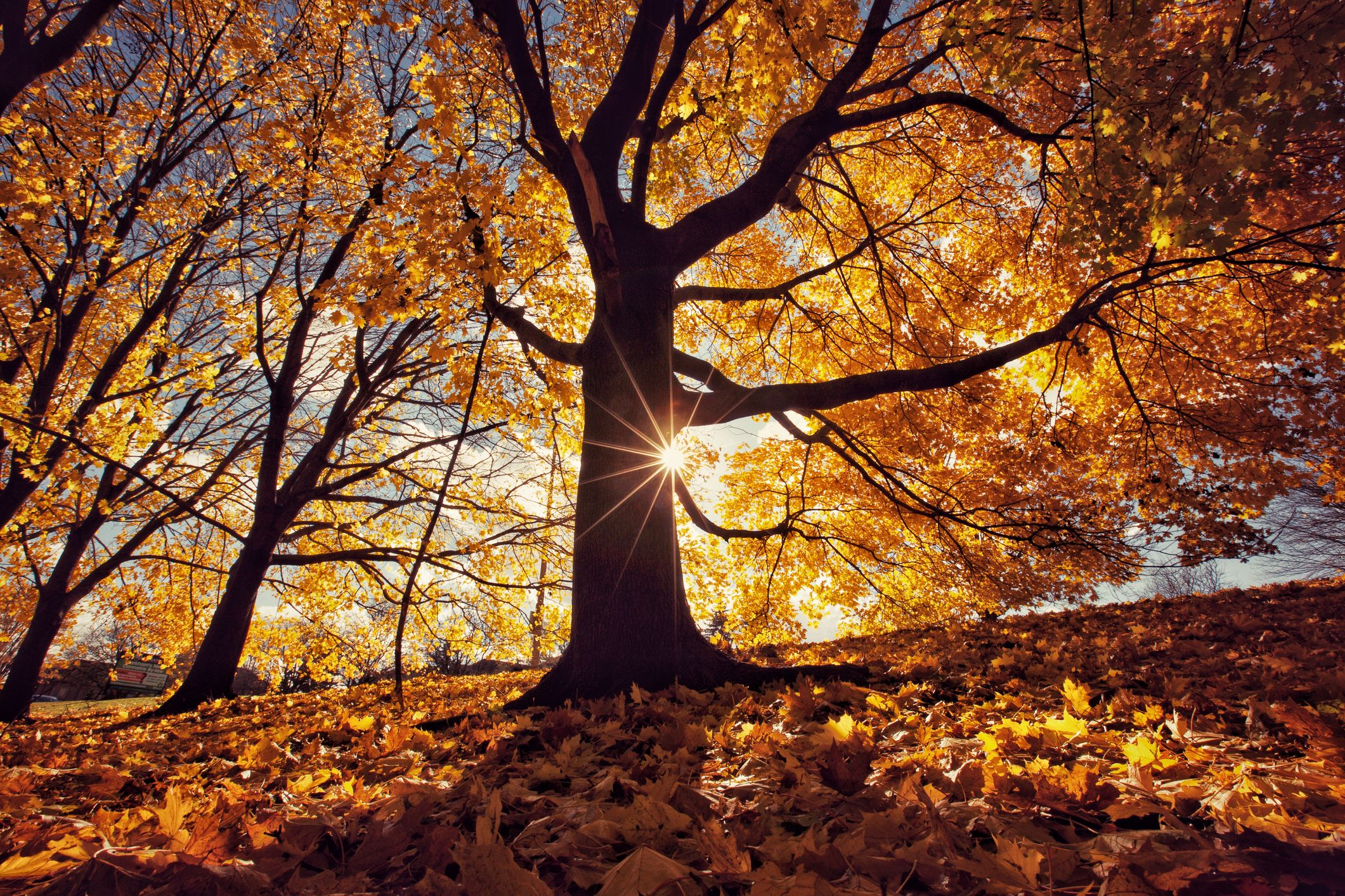 14 Best Autumn Poems - Classic Poems About Fall