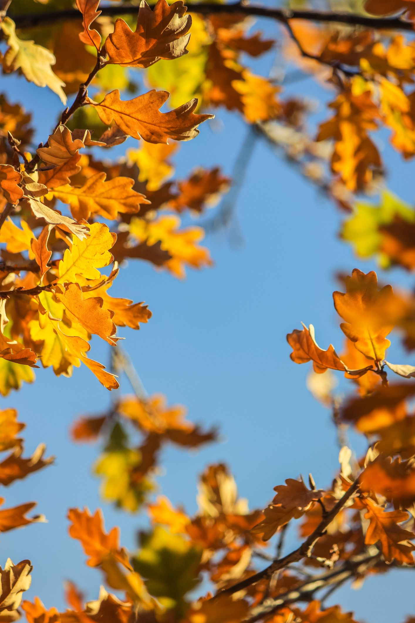 Autumn is the best season for gardening, says the RHS