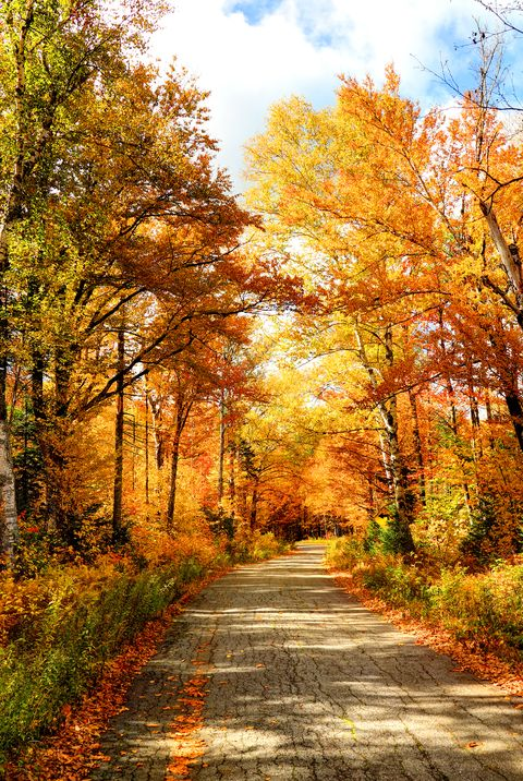 autumn road in new hampshire