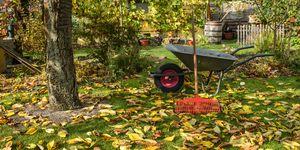 Wheelbarrow in garden - tidying your garden tips