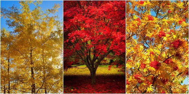 autumn trees for colour