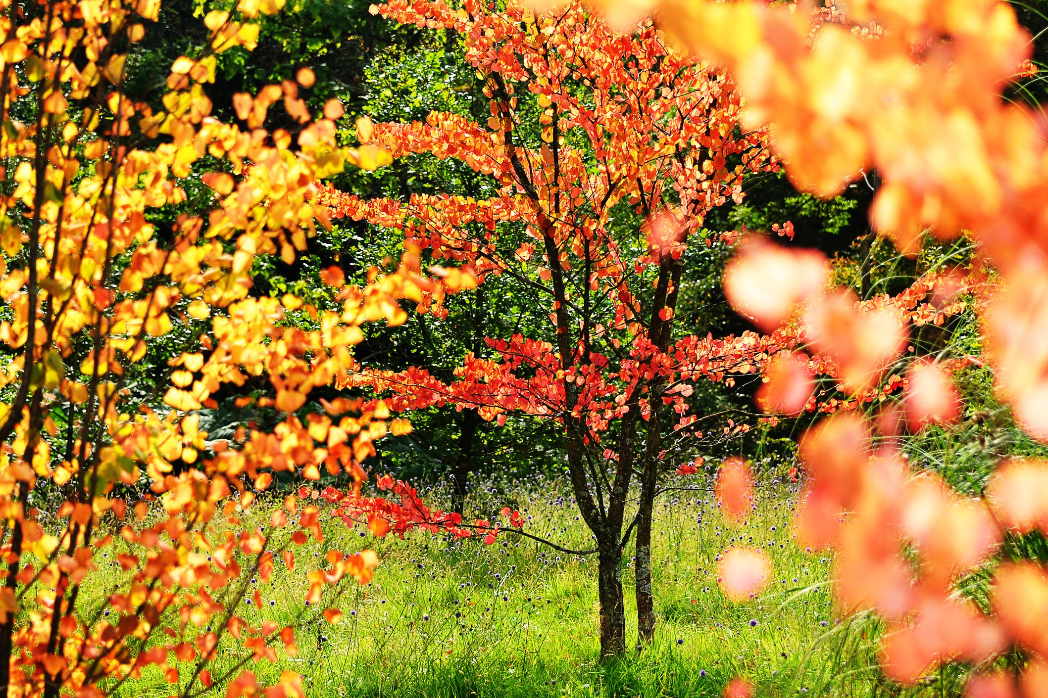 Gardening in October: This is absolutely everything you need to do